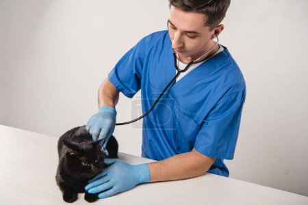 Konzentrierter Tierarzt untersucht schwarze Katze auf grauem Hintergrund