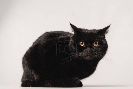 Photo pour Chat noir assis sur la table sur fond gris - image libre de droit