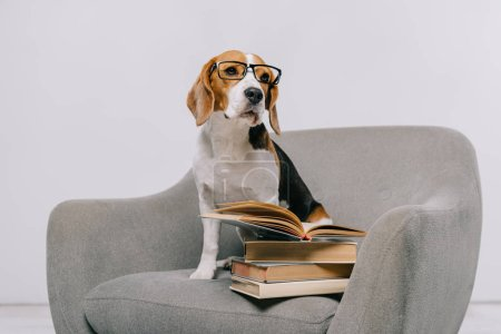 cute beagle dog in armchair with books on grey background