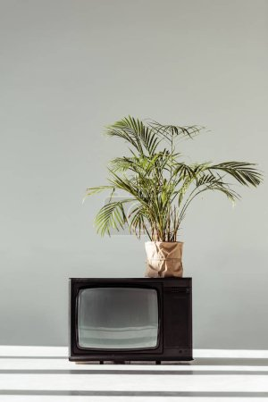 green plant in pot on vintage tv on grey background