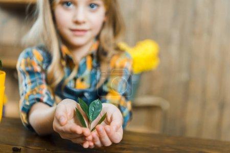 Photo pour Foyer sélectif de feuilles vertes dans les mains de mignon enfant - image libre de droit