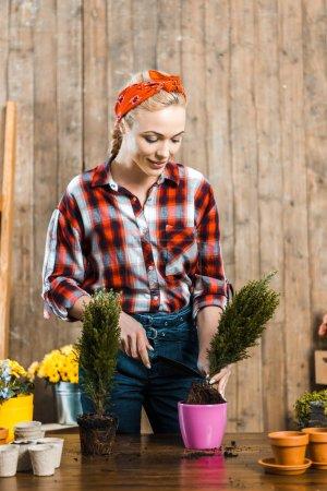 Photo pour Soin femme maintenant et pelle en transplantant des plantes en pot - image libre de droit