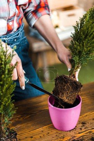 Photo pour Vue recadrée de femme maintenant et pelle en transplantant des plantes en pot - image libre de droit