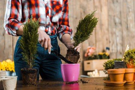 Photo pour Recadrée vue de femme tenant pelle et repiquage des plantes vertes en pot - image libre de droit