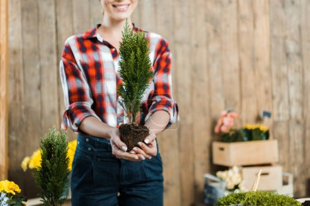 Photo for Cropped view of cheerful woman holding green plant with ground in hands - Royalty Free Image