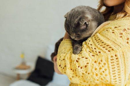 Photo pour Vue recadrée de jeune femme retenant le chat de pli écossais mignon à la maison avec l'espace de copie - image libre de droit