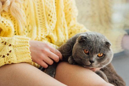 Photo for Cropped view of young woman in knitted sweater holding scottish fold cat at home - Royalty Free Image