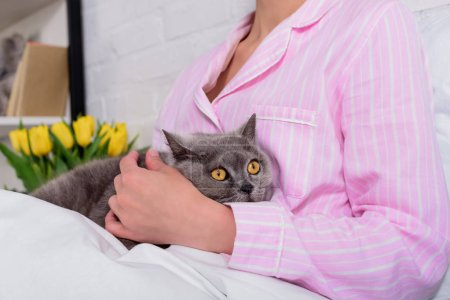 Photo pour Recadrée tir de femme avec chat shorthair Grande-Bretagne sur lit à la maison - image libre de droit