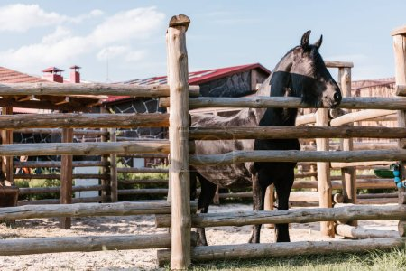 close up image of horse standing near wooden fence in corral at zoo