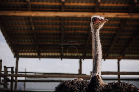 low angle view of ostrich standing against ceiling of corral at zoo