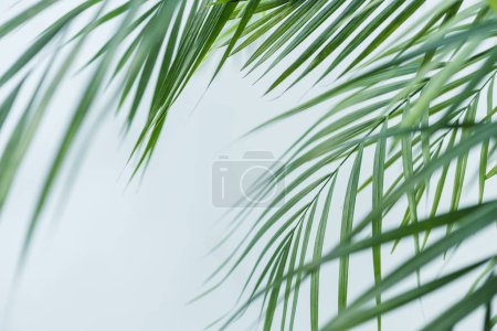 close up view of palm leaves isolated on grey background