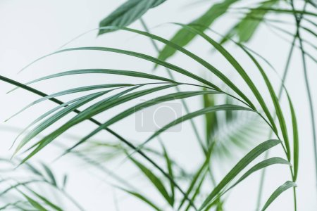 close up view of green palm leaves on blurred grey background