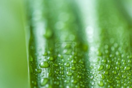 Photo for Close up view of green leaf with water drops on blurred background - Royalty Free Image