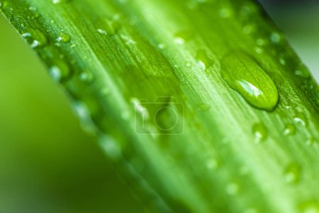 close up view of green leaf with water drops on blurred background