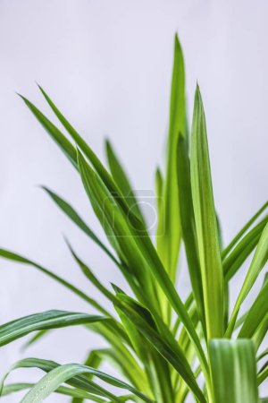 close up view of green leaves isolated on grey background