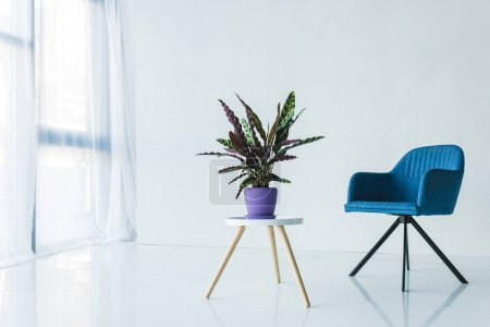 Photo for Interior of living room in minimalistic design with armchair and calathea lancifolia plant in pot on table - Royalty Free Image