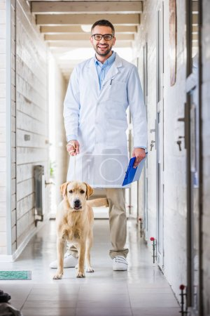 smiling veterinarian standing with labrador dog in corridor of veterinary clinic