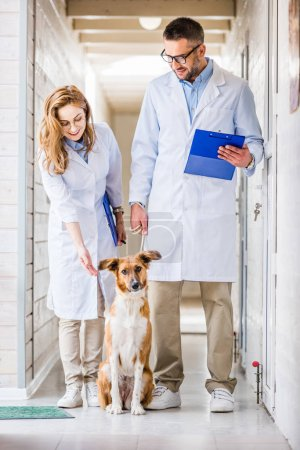 two veterinarians standing with dog in corridor of veterinary clinic