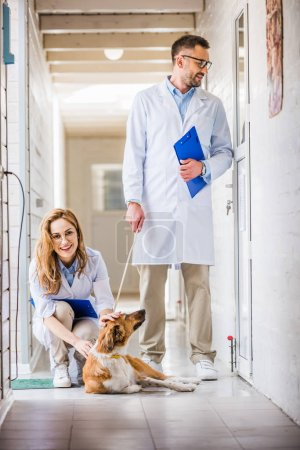 male and female vets with dog at veterinary clinic