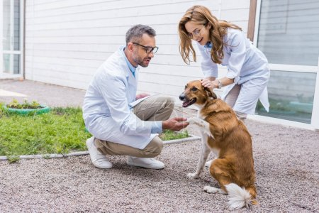 female and male veterinarians palming dog on yard at veterinary clinic