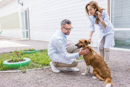 two vets palming dog on yard at veterinary clinic
