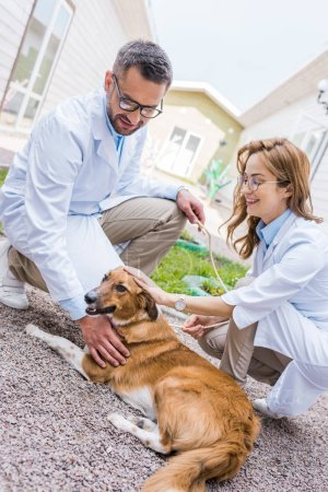 Photo for Two smiling veterinarians palming dog on yard at veterinary clinic - Royalty Free Image