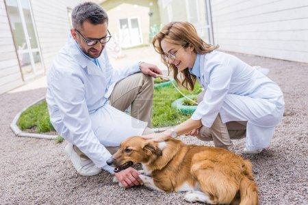 Foto de Dos veterinarios descargando perro en yarda en clínica veterinaria - Imagen libre de derechos