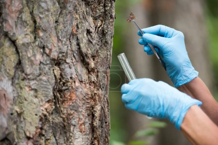 cropped image of female scientist in latex gloves putting bark of tree by tweezers in test flask in forest
