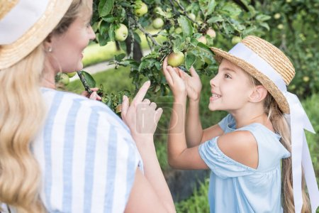 blonde mother and daughter picking green apples in orchard