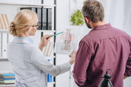 Photo pour Physiothérapeute féminine montrant l'image du corps humain au patient à la clinique - image libre de droit