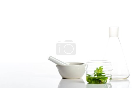 Photo for Mortar with pestle and glass jars with herbs isolated on white - Royalty Free Image