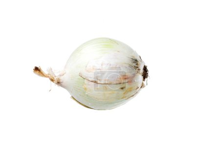 close-up view of raw single whole onion isolated on white