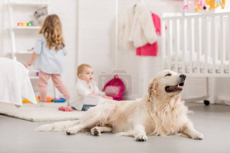 Photo for Selective focus of kids playing on floor, fluffy golden retriever lying near in children room - Royalty Free Image