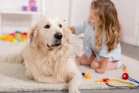 adorable kid pretending veterinarian and examining golden retriever dog in children room