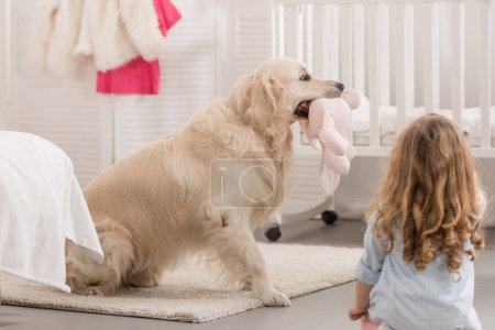Photo for Back view of kid looking at golden retriever holding toy in children room - Royalty Free Image