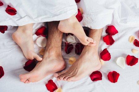 Photo pour Vue recadrée d'un couple amoureux couché sur une literie blanche douce avec des pétales rouges - image libre de droit