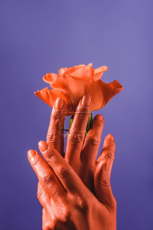 Photo for Partial view of woman with coral colored hands holding coral rose on violet background, color of 2019 concept - Royalty Free Image
