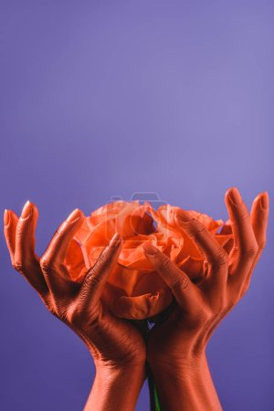 Photo for Cropped view of woman holding coral roses in coral colored hands on violet background, color of 2019 concept - Royalty Free Image