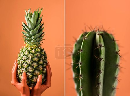 Photo for Selective focus of green cactus, and partial view of color colored female hands with pineapple fruit on divided coral background, color of 2019 concept - Royalty Free Image