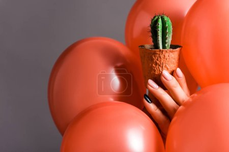 Photo for Cropped view of female hand with cactus in flower pot and coral air balloons on grey background, color of 2019 concept - Royalty Free Image