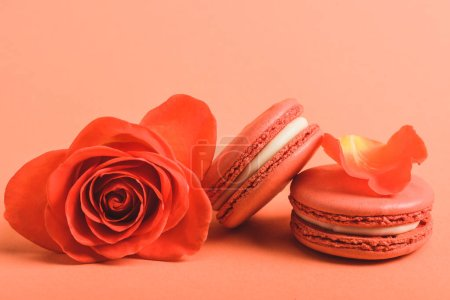 Photo for Coral rose flower and delicious macarons on coral background, color of 2019 concept - Royalty Free Image