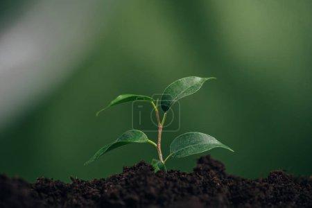 Photo pour Gros plan de jeune plante verte au sol sur l'arrière-plan flou, la notion de jour de la terre - image libre de droit