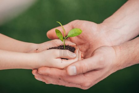 Photo for Cropped view of man holding child hands with young plant on blurred background, earth day concept - Royalty Free Image