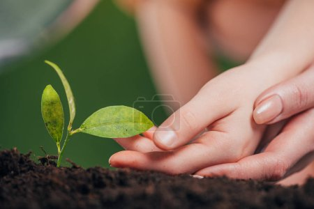 selective focus of woman and kid hands near young green plant growing in ground on blurred background, earth day concept