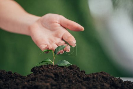Photo for Selective focus of woman touching young plant growing in ground on blurred background, earth day concept - Royalty Free Image