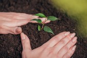 """Постер, картина, фотообои """"выборочный фокус женщины посадки молодых зеленых растений на размытый фон, концепция день земли"""""""