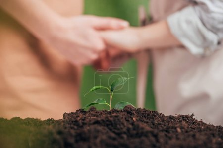 selective focus of young green plant, and man holding kid hands on blurred background, earth day concept