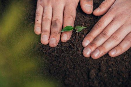Photo pour Vue partielle de l'homme jeune plant de plantation dans le sol, la notion de jour de la terre - image libre de droit