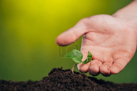 selective focus of man touching growing green plant on blurred background, earth day concept