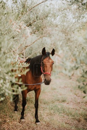 Beautiful brown horse in olive groove